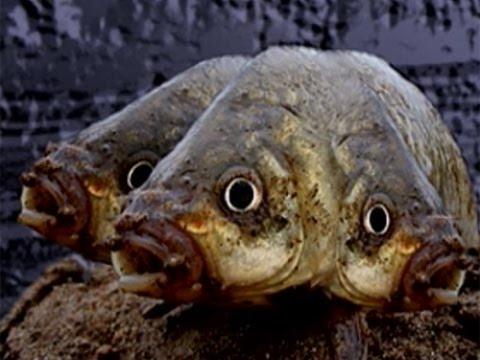 дает возможность двухголовые рыбы в москве реке фото ресниц являет уходовой