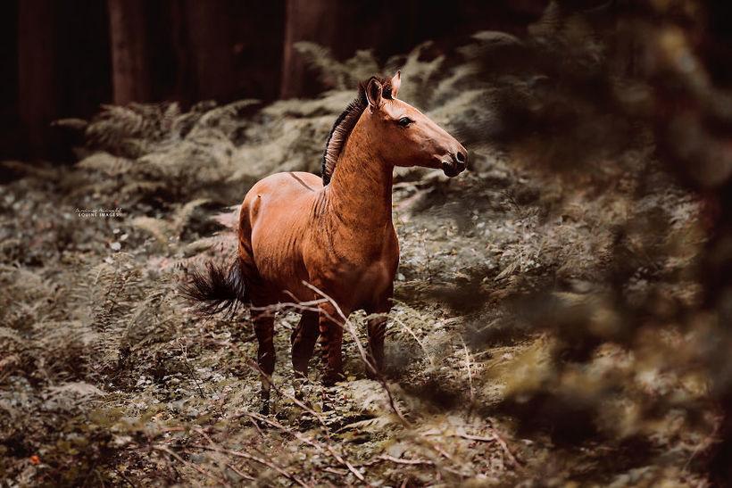 Фотограф сняла потрясающее животное — гибрид зебры и лошади