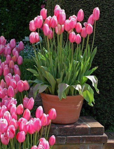 Секрет самого пышного и беспрерывного цветения - многослойная посадка.