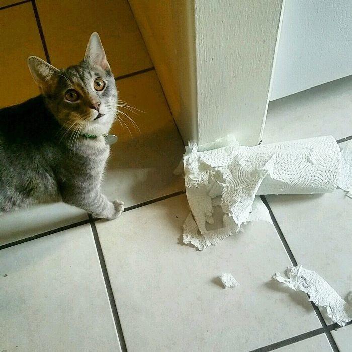 Ежедневная борьба с бумажными полотенцами дом, животные, проступок, шалость