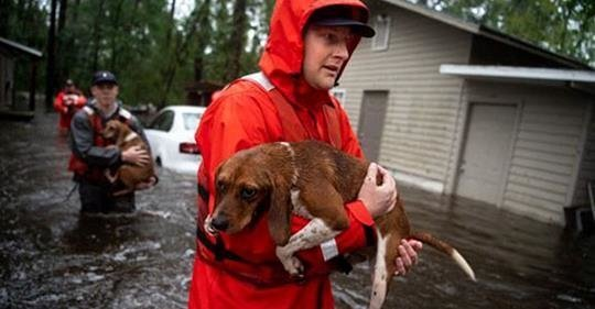 Спасительницу кошек и собак арестовали за организацию стихийного приюта во время наводнения Crazy's Claws N Paws, North Carolina, Tammie Hedge, животные, приют для бездомных