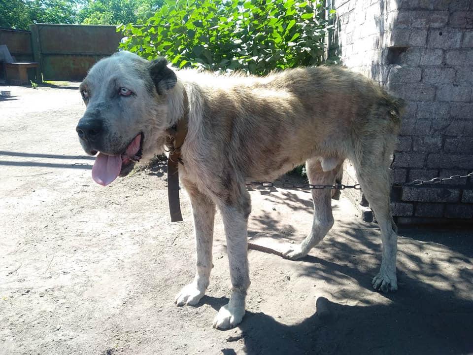 Собака, которую похитили, впервые за 2 года увидела хозяйку