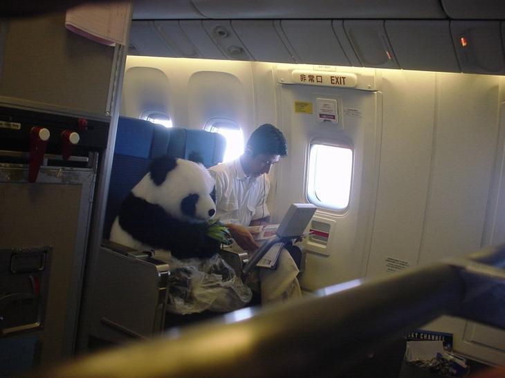1. Панда летит в зоопарк животные, смех, снимок