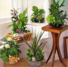 МИР РАСТЕНИЙ.Закон выращивания комнатных растений (8-а)