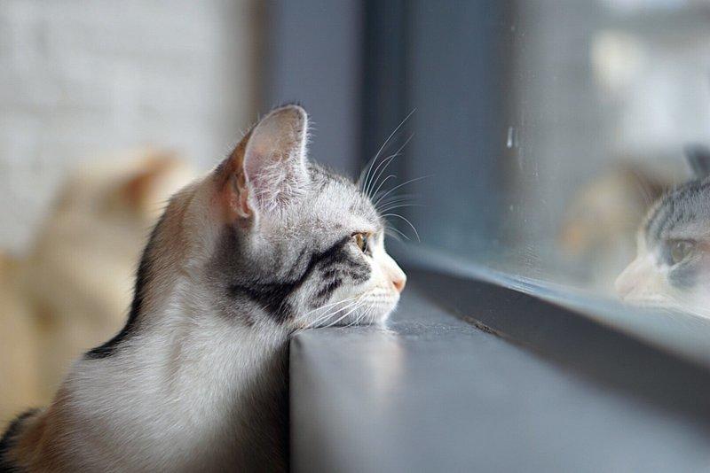 она фото кошек смотрящих в окно моделях