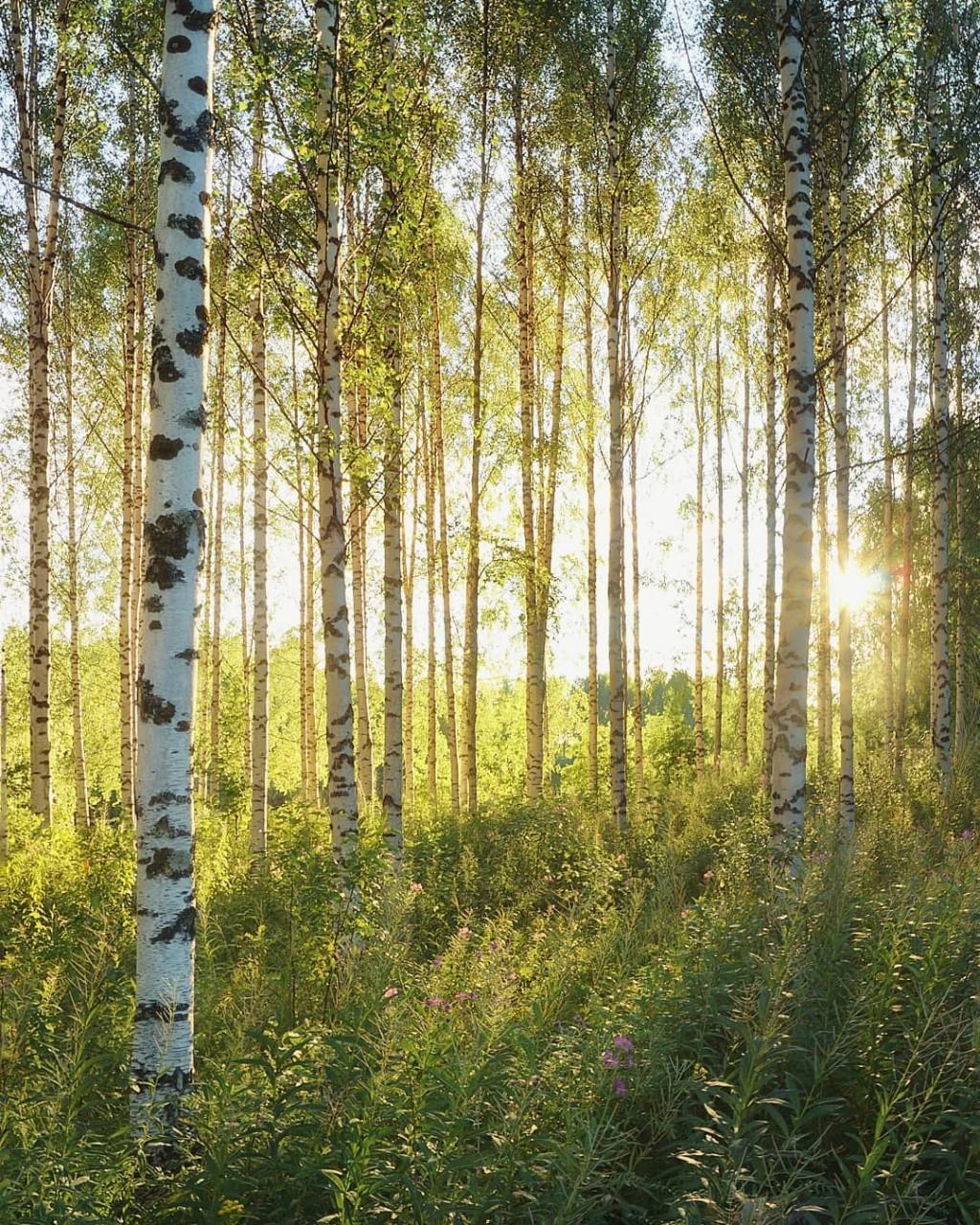 Финляндия на снимках Эсси Траутвейн