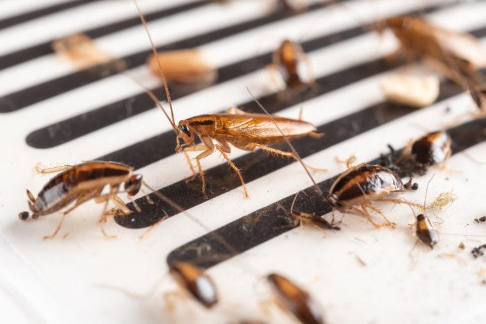 6 способов не допустить попадания тараканов и других насекомых в ваш дом