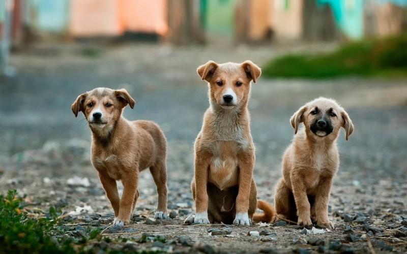 Собаки спасли ребенка, которого выбросили в мусорный контейнер