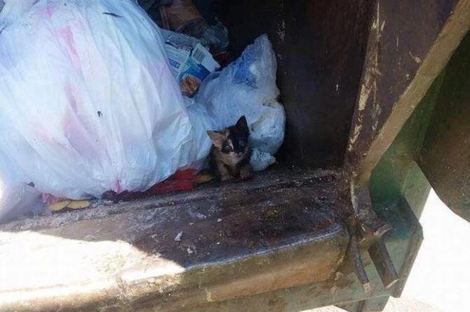 Уборщик разорвал шевелящийся пакет с мусором и то, что он нашел там, потрясло его до глубины души