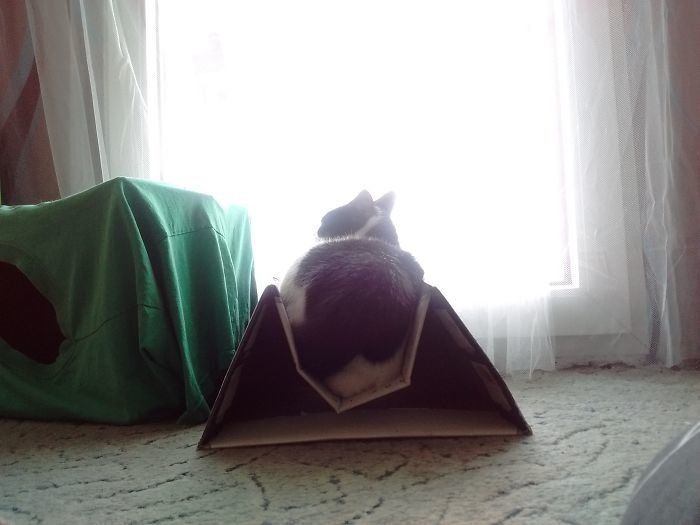 Кот сломал систему. И коробку. животные, кот, коты, кошки, приколы с животными, смешно, фото, юмор