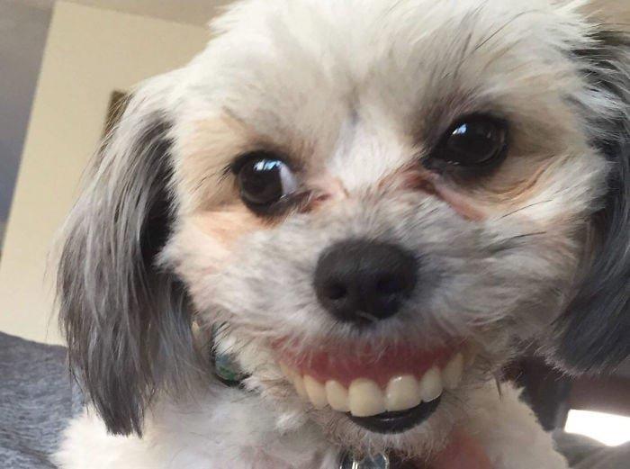 Когда папа проснулся, то сразу обнаружил пропажу, а поиски завершились очень быстро и весело животные, зубные протезы, зубы, прикол, собака, юмор