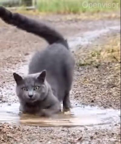 Этот кот сломал систему супер