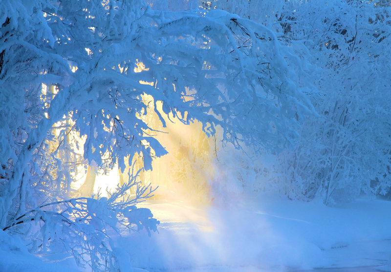 Заснеженные ветки в зимнем лесу