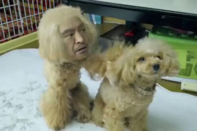 Японская реклама Amazon: собака, человек и безумие