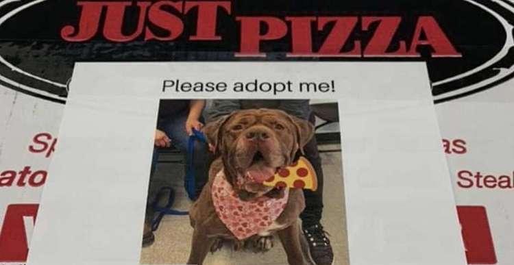 На коробках в пиццерии есть фото собак из приюта. Так их чаще оттуда забирают
