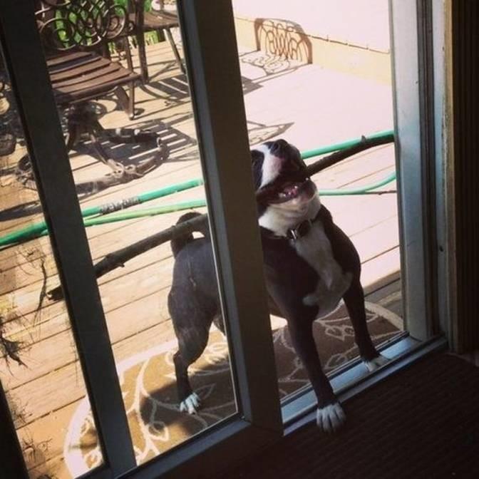 """""""Помогите зайти!"""" животные, смех, снимок"""