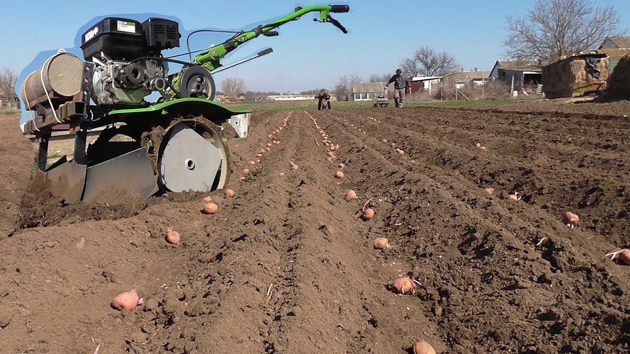 Посадка картофеля мотоблоком нева фото