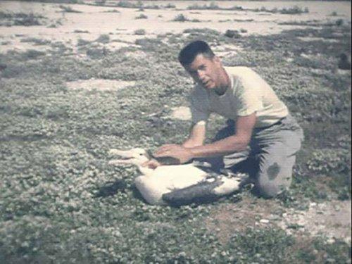 Чендлер Роббинс окольцовывает альбатроса на атолле Мидоуэй. Исследователь скончался в 2017 году в мире, мудрость, птица, ученые, чайка, яйцо
