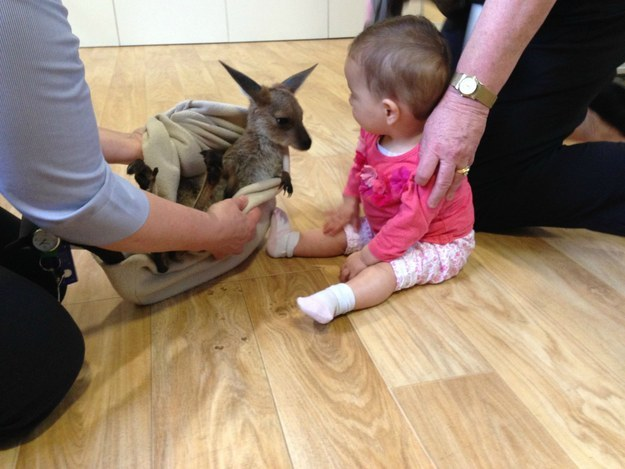 And this joey meeting a baby human for the very first time.