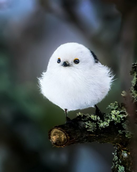 Реальные Angry Birds на фотографиях Осси Сааринена