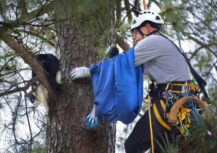 Американский пенсионер резво лазает по деревьям, бесплатно спасая котов