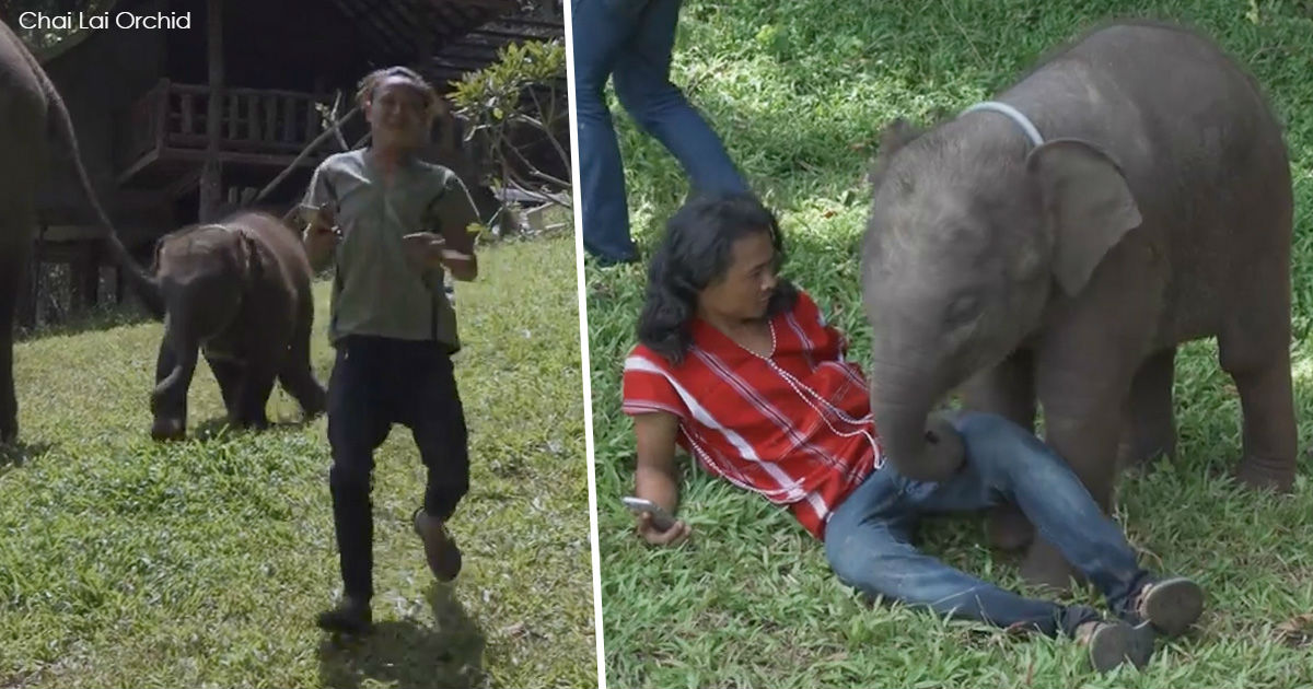 Маленький слоненок не может перестать обнимать туристов в Таиланде