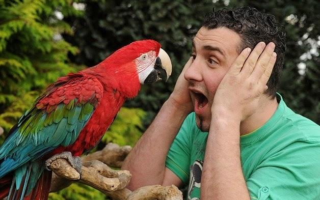 Опасная Австралия. 10 самых коварных попугаев Сиднея