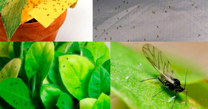 Обычные спички могут спасти умирающее растение! Опытные цветоводы делятся своими секретами домашние растения