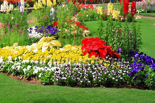 Красивоцветущие многолетники для сада