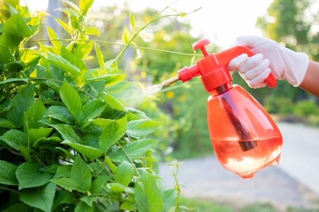 Пора подкормить овощи. Чем и как удобрить растения в июне?