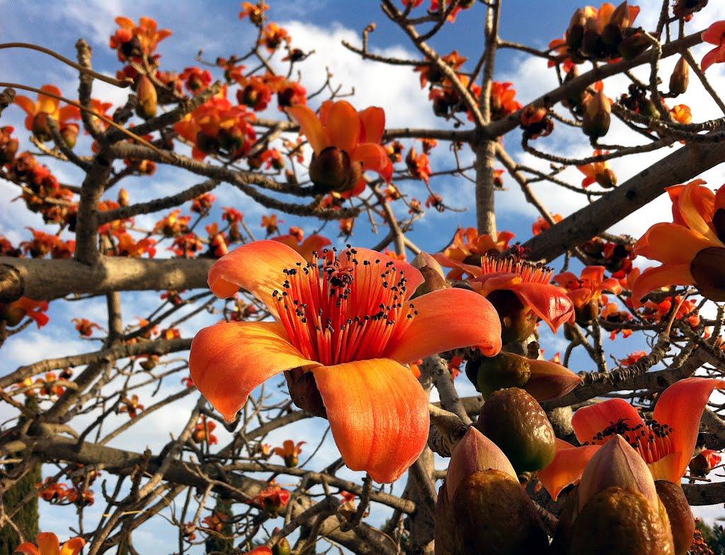 всех цветущие деревья индии фото россия была