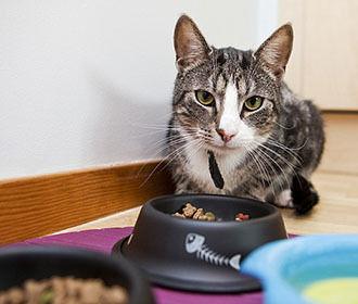 Чем кормить кошку: лучшие сухие корма по мнению специалистов домашние животные,наши любимцы