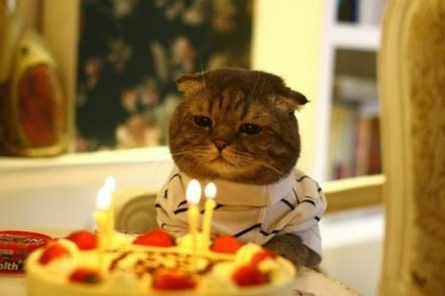 23 наглядных фотодоказательства того, что кошки ведут себя, как люди