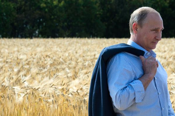 Путин: «Пойду работать комбайнером»
