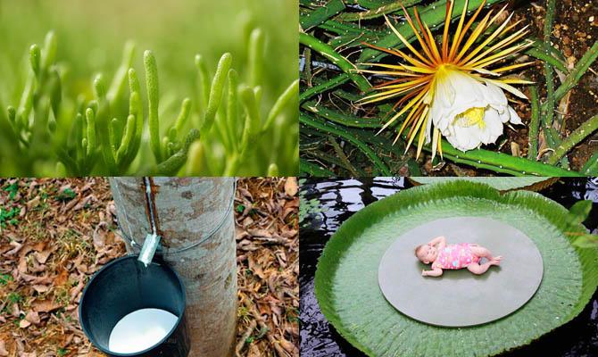 Интересные факты о растениях…