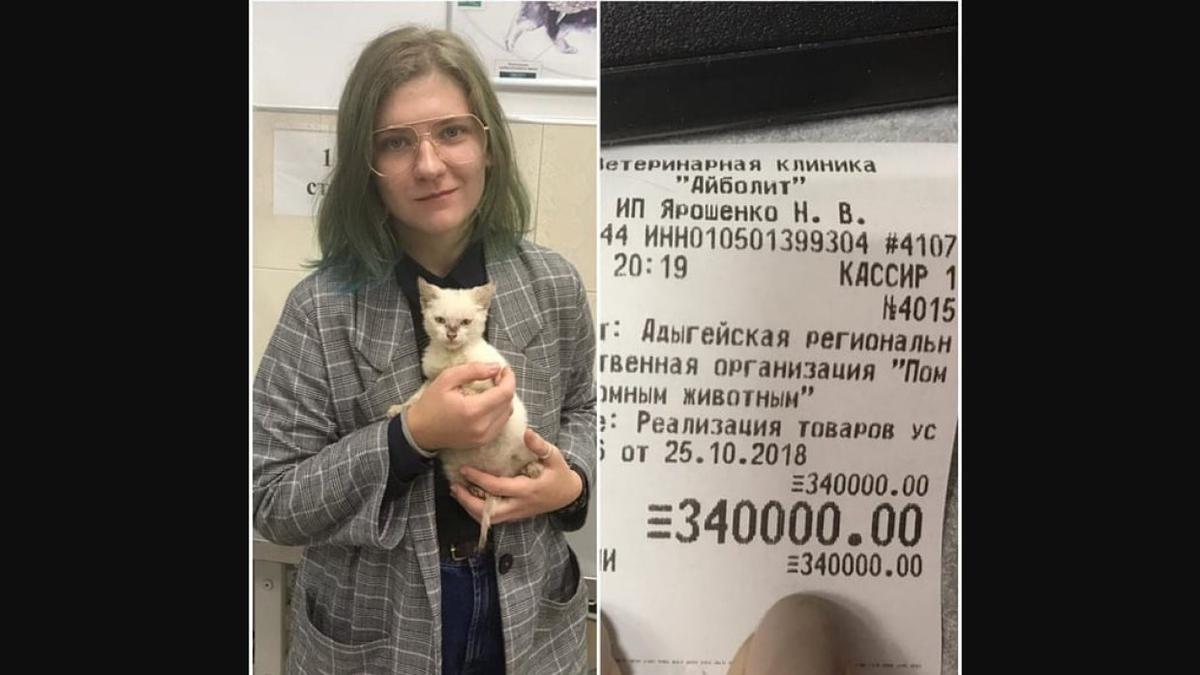 Студентка устроила котенка в приют за 340 тысяч рублей