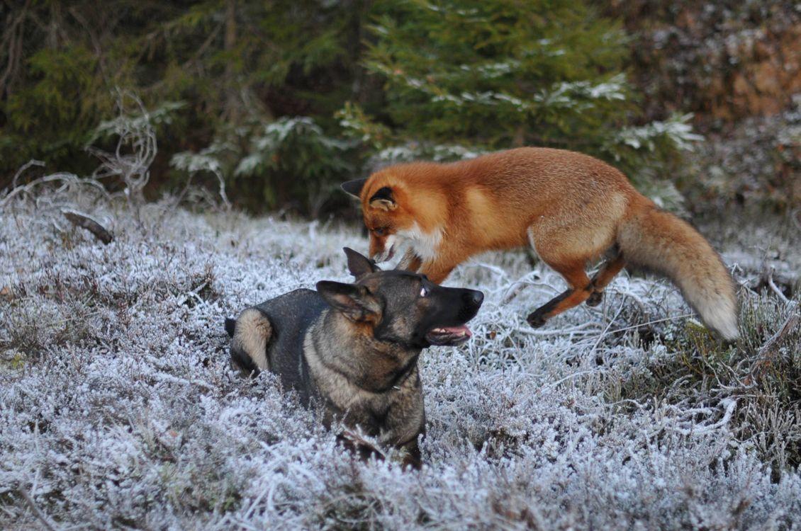 любимая картинки лиса и пса седокова зовут
