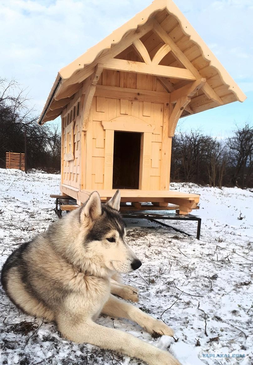 Собачья будка своими руками - пошаговая инструкция 21