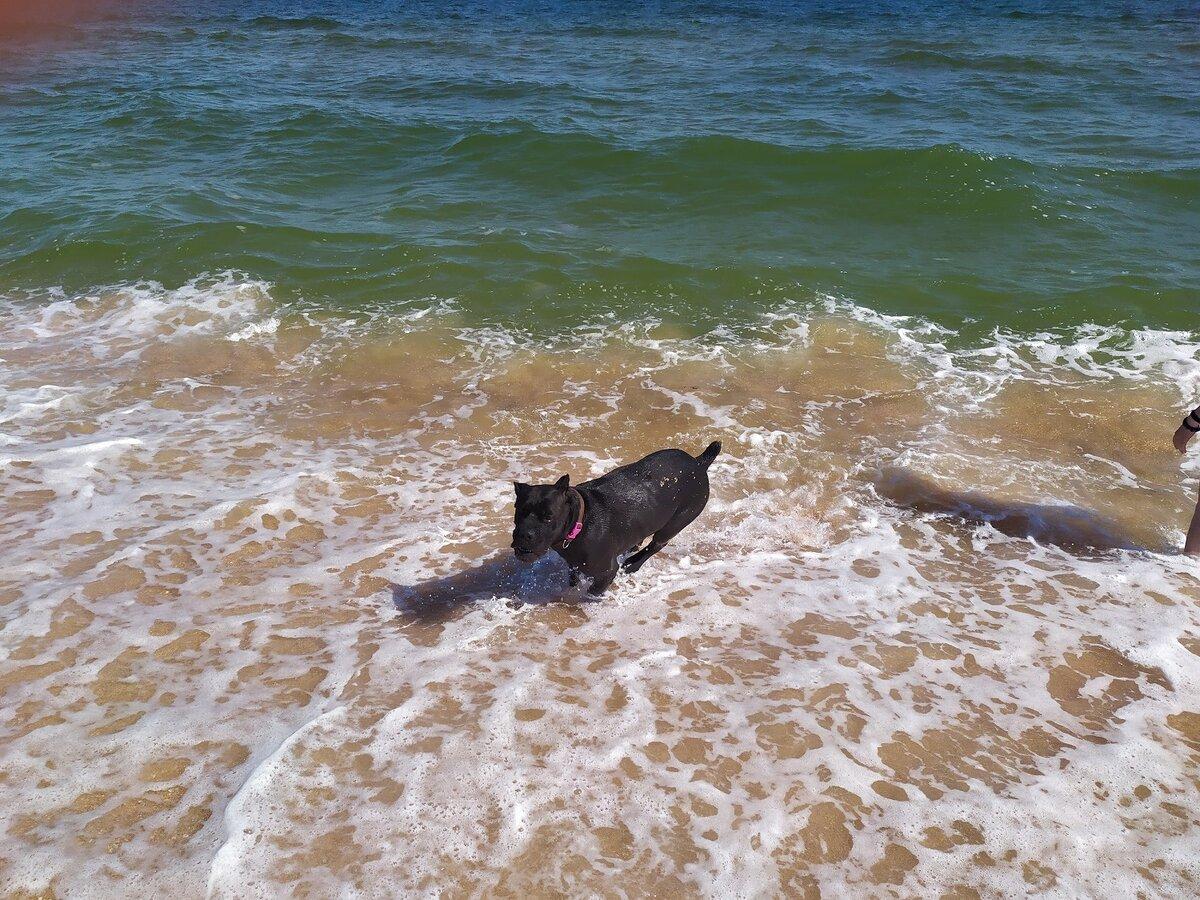 Собаки и море