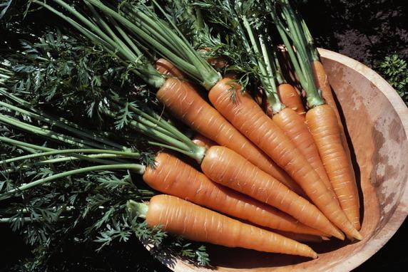 Почему гниёт морковь