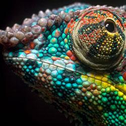 ТЕРЕМОК. Удивительные животн…