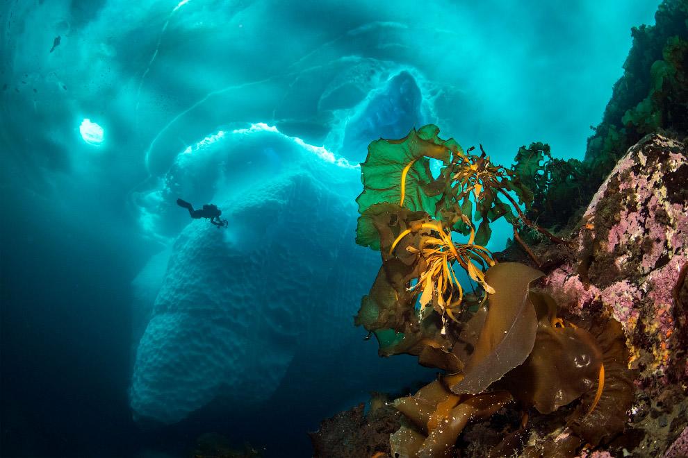 Stunning photos show ice dive beneath giant iceberg