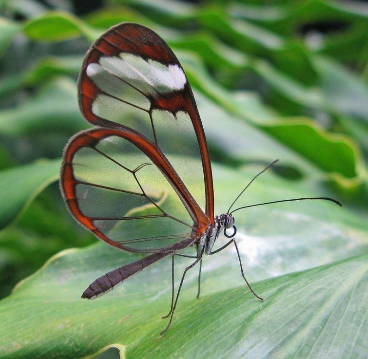 Грета Ото Прозрачные, животные, фауна