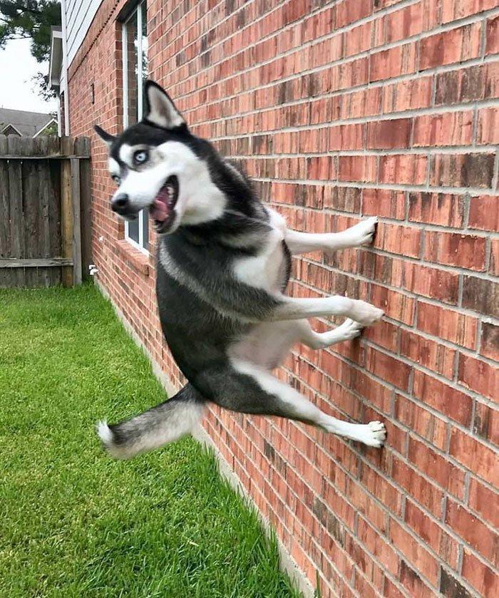 Антигравитационная собака всемирное тяготение, забавно, закон гравитации, истории в картинках, неожиданно, против законов физики, удивительно, удивительное рядом