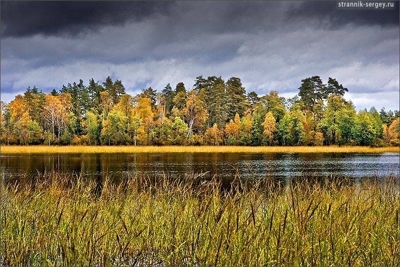 Волшебство Мещеры. Край поэтичной красоты лесов , озер и болот