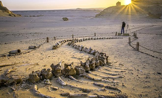 Долина китов в Сахаре: люди нашли следы огромных 20 метровых созданий посреди пустыни Культура