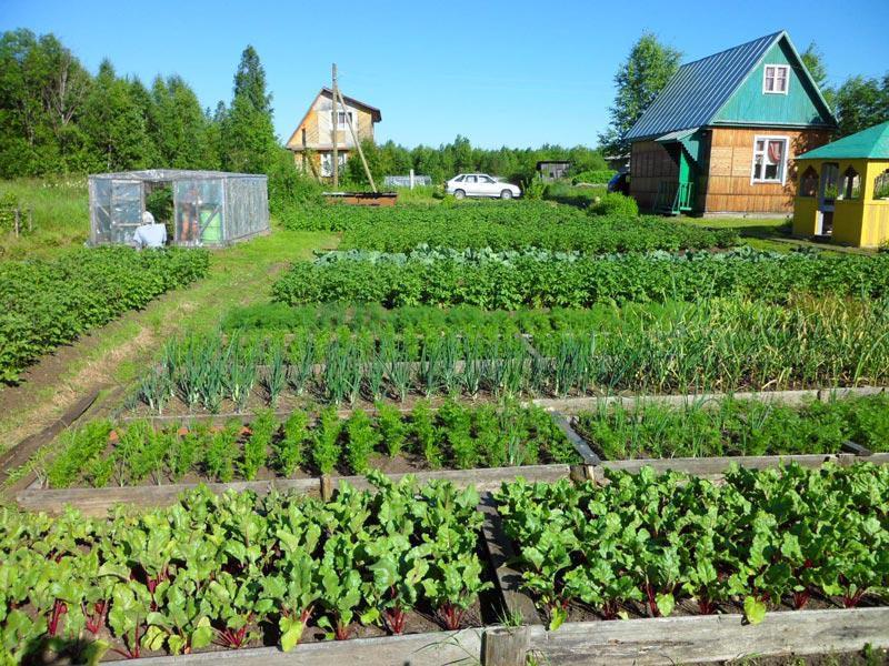 Шпаргалка для дачников на лето - чем и когда удобрять овощи