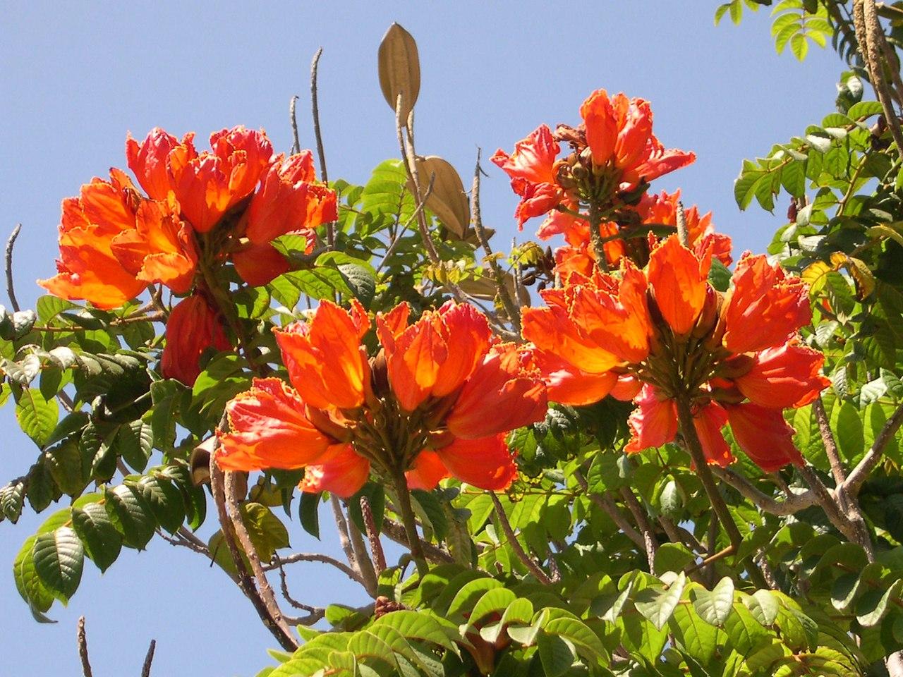 растения южные деревья фото и названия сочи самое убийственное