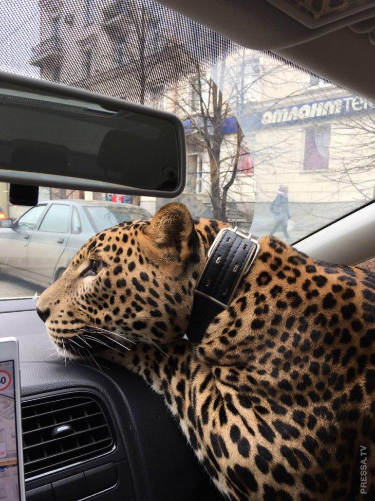 Необычный пассажир такси