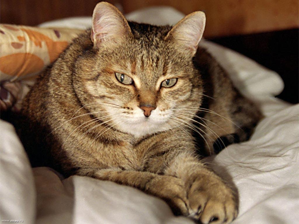 Смотреть смешные котики на ютубе смешно до слез, днем рождения